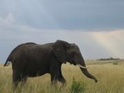 safari 26