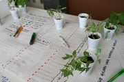 Golden Spaces: free tomato plant with every comment you write down