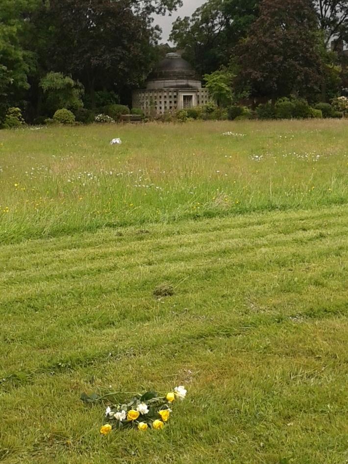 Alma lawn East 2016-06-14