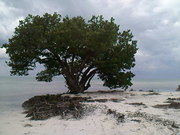Annes Beach. Islamorada. Florida Keys.