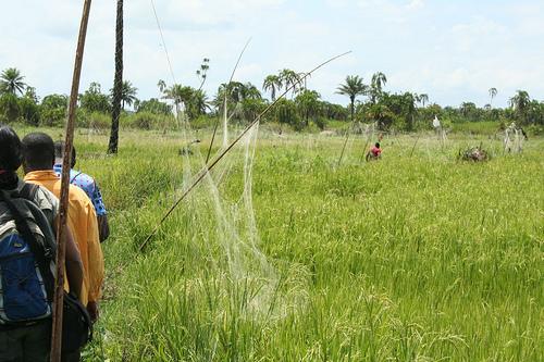 Upper dam:using nets