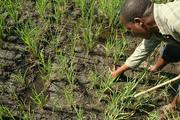 Block 4 UNVDA farms - planting distances