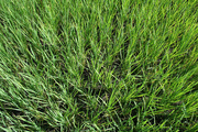 Mile 25: dry fields