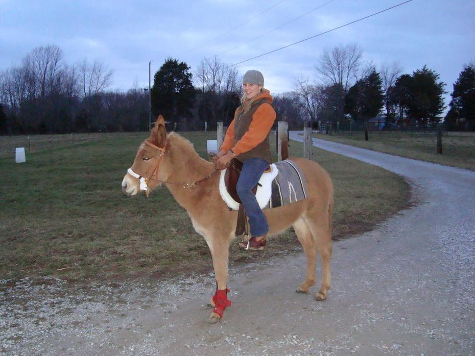 Cerise Little gaited Mule.