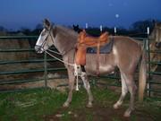 Jewel the mule!!!!