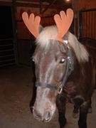 Drifter the Christmas Horse