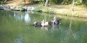Buffalo River swimming