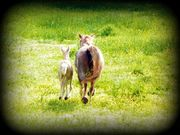 New babies 2011