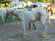 horses 015