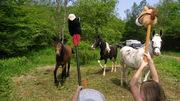 Stick pony rumble