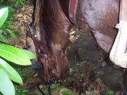 little watering hole.
