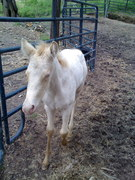 Jezebel the day she was born!