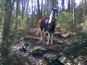 2012 horse sale