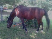 Horses and Life, my boy still going!