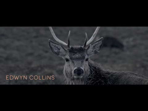 Edwyn Collins - I'm Ok Jack (Official Video)