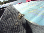 well hello fly