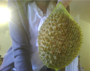 Look at this beautiful durian