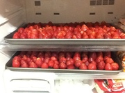 First batch of Strawberries in the freezer