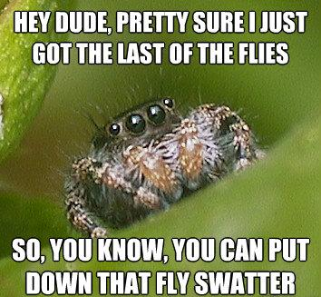 Poor Misunderstood spider