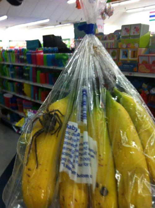 Oh those bananas look nic- HOLY CRAP AW HELL NO