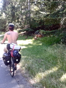 Cycling with Fawns