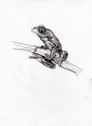 Tree Frog Drawing
