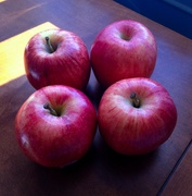 Snack of Gala apples