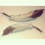 2013 Simple Feather Painting