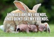 animals-are-my-friends-and-i-dont-eat-my-friends-quote-1