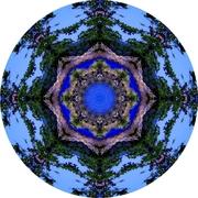 fairy-circle