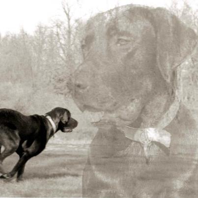Ranger - Logans Pup!