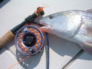 Redfish on a Spoon Fly