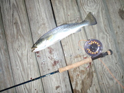 Seatrout and Sage Rod