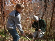 Harvesting with digging sticks that we carved