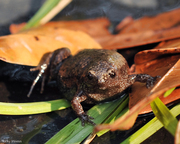 Discovery Series, FROGS, FROGS & MORE FROGS!