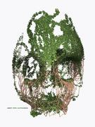 Ivy Skull