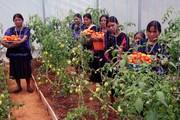 Proyecto de Soberanía Alimentaria 3