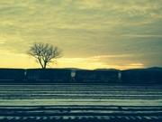 Tree seen from train