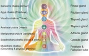 chakras and the corresponding glands