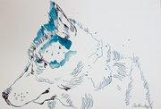 Schlittenhund - Version 2 – 18 x 26 cm – Tusche auf Aquarellkarton  (c) Zeichnung von Susanne Haun