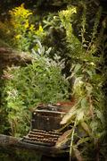 Dreaming Garden 10
