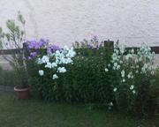 a szep viragaim