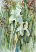 White iris.