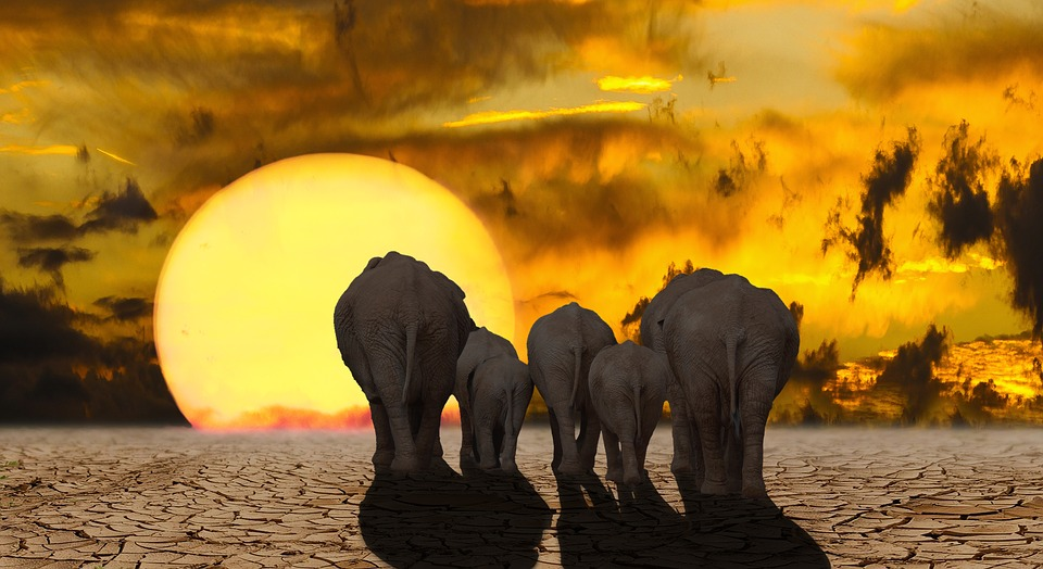 Report: All Life at Extreme Risk of Extinction Due to Unprecedented Biodiversity Loss
