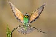 Als een vliegende regenboog.