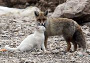 Foxy Friends