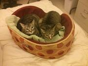 My Two Kitties