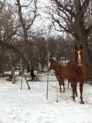 Horses and a pony