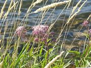 Stoney creek photo.2