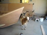 goat building buddies 003